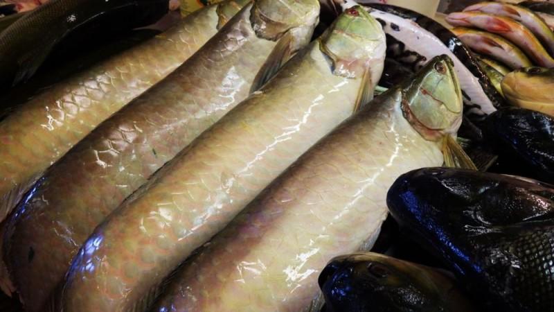 ブラジルの魚市場で売られているアロワナの様子
