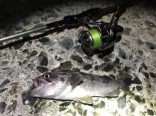 クロソイ用ワームは3種でOK!釣れるワームの使い方、カラー等