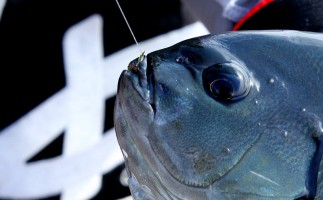 難しいグレのフカセ釣り完全攻略!確実に釣る方法「刺し餌先行術」とは?
