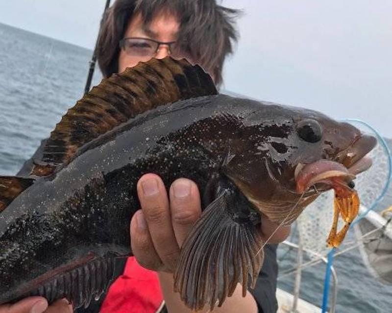 アイナメを釣った鷲谷さん