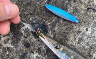 ジグサビキの使い方とは?推奨タックルや狙える魚、使い方の応用