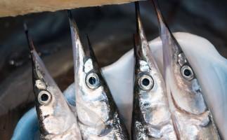 サヨリ釣りの仕掛け絡まり対策はパワーイソメで解決!使い方・誘い方など
