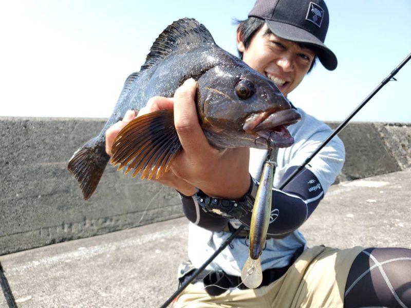 ハードルアーで釣ったアイナメ
