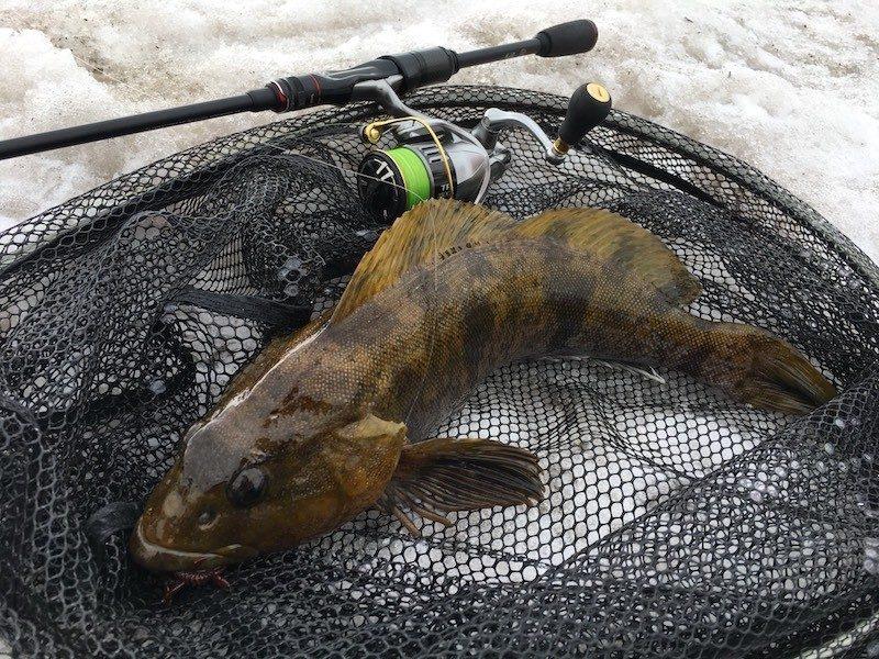 BPMで釣ったアイナメ