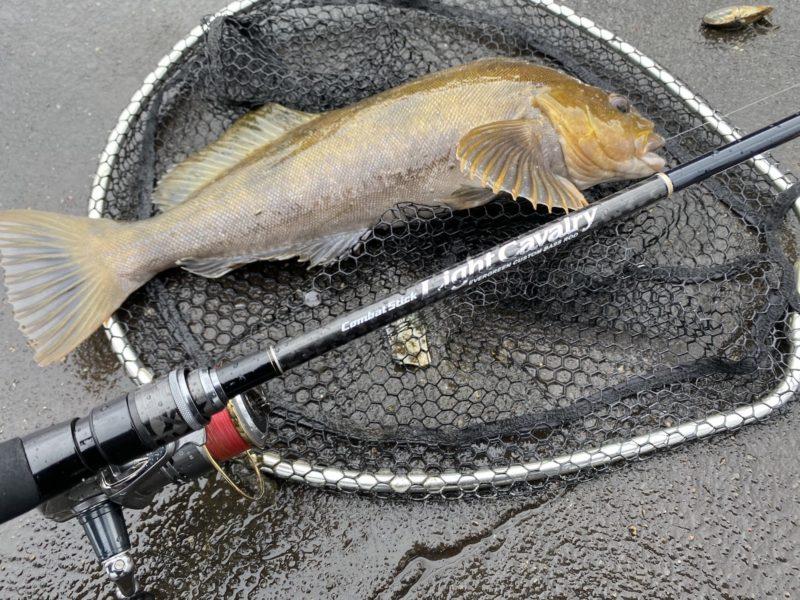 エバーグリーンのバスロッドで釣ったアイナメ
