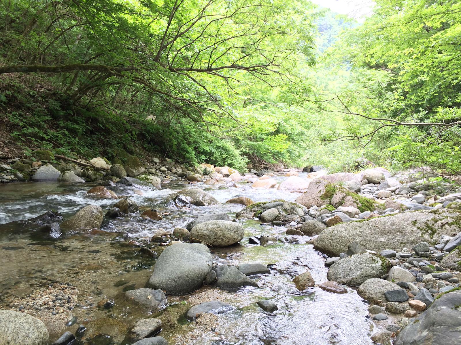 真夏の山岳渓流