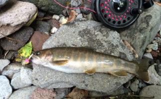山岳渓流のイワナをフライフィッシングで釣るコツ – 季節別ポイント選びとフライセレクト