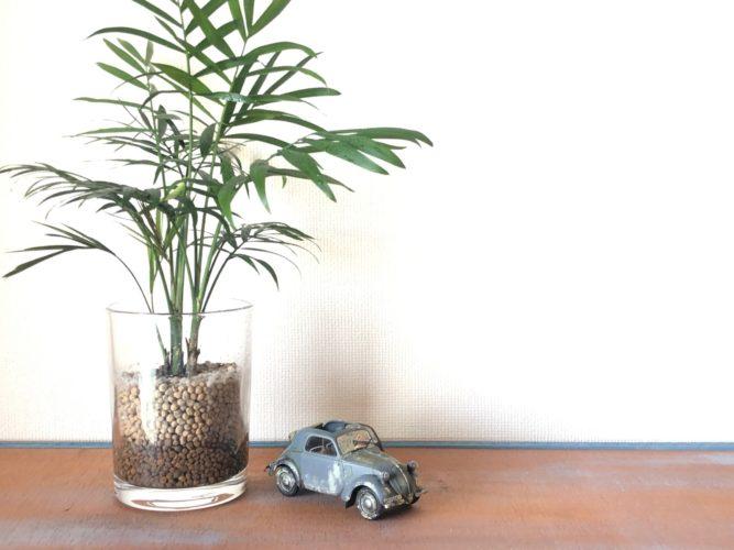 シムカ5×植物