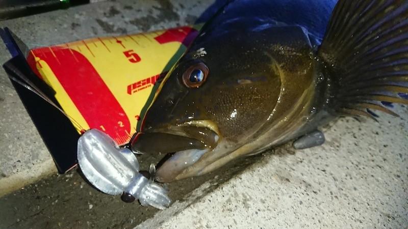 プニイカで釣った夜アイナメ