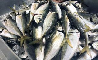 釣れるおすすめアジングワームの選び方・誘い方と、意外と重要な収納ケース