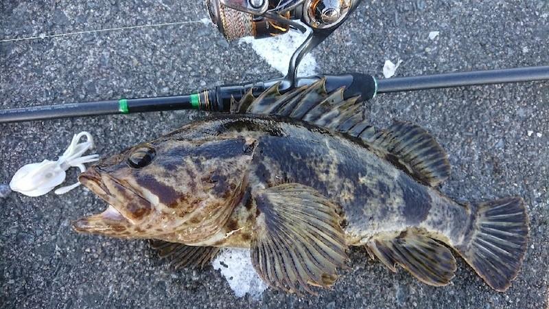 プニイカで釣ったベッコゾイ
