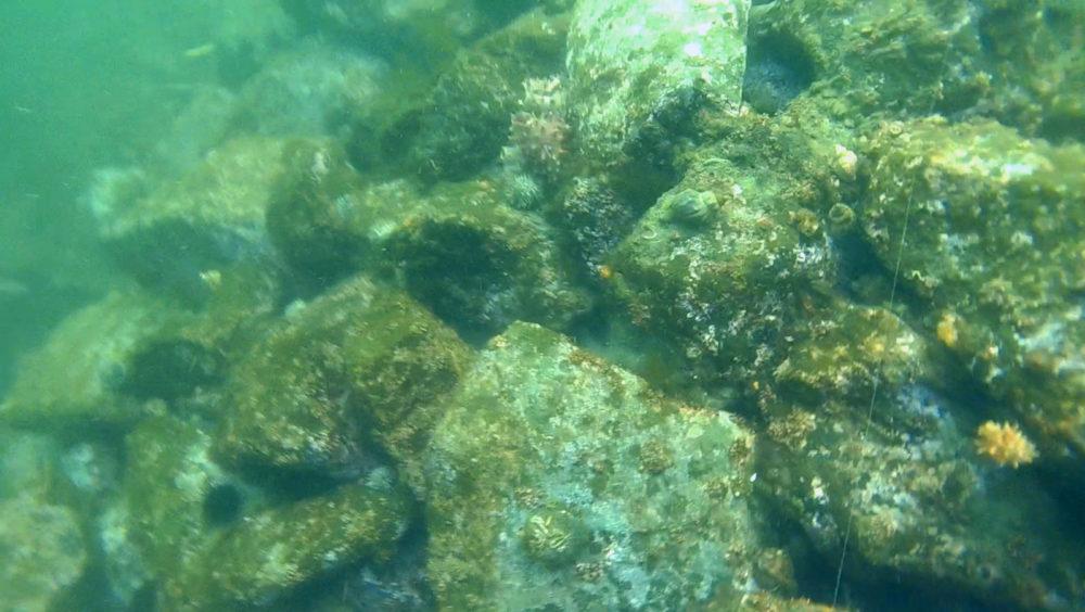 ロックフィッシュが好むゴロ石
